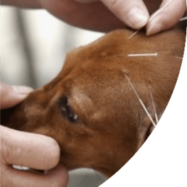 NOVEMBER 13TH, 2020 Animal Acupuncture